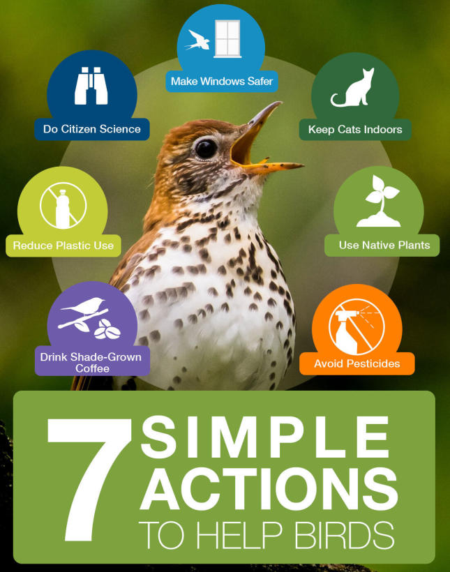 3 Billion Birds - 7 Simple Actions